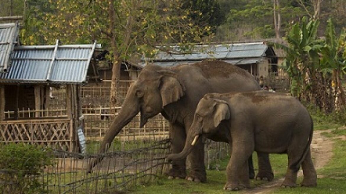 Human and Elephant conflicts in Wokha: Plans for rescue centre