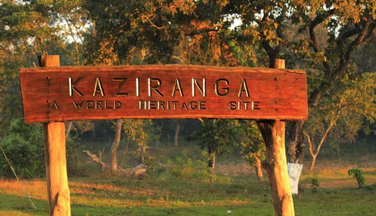 Over 64K tourist in Kaziranga National Park after reopening