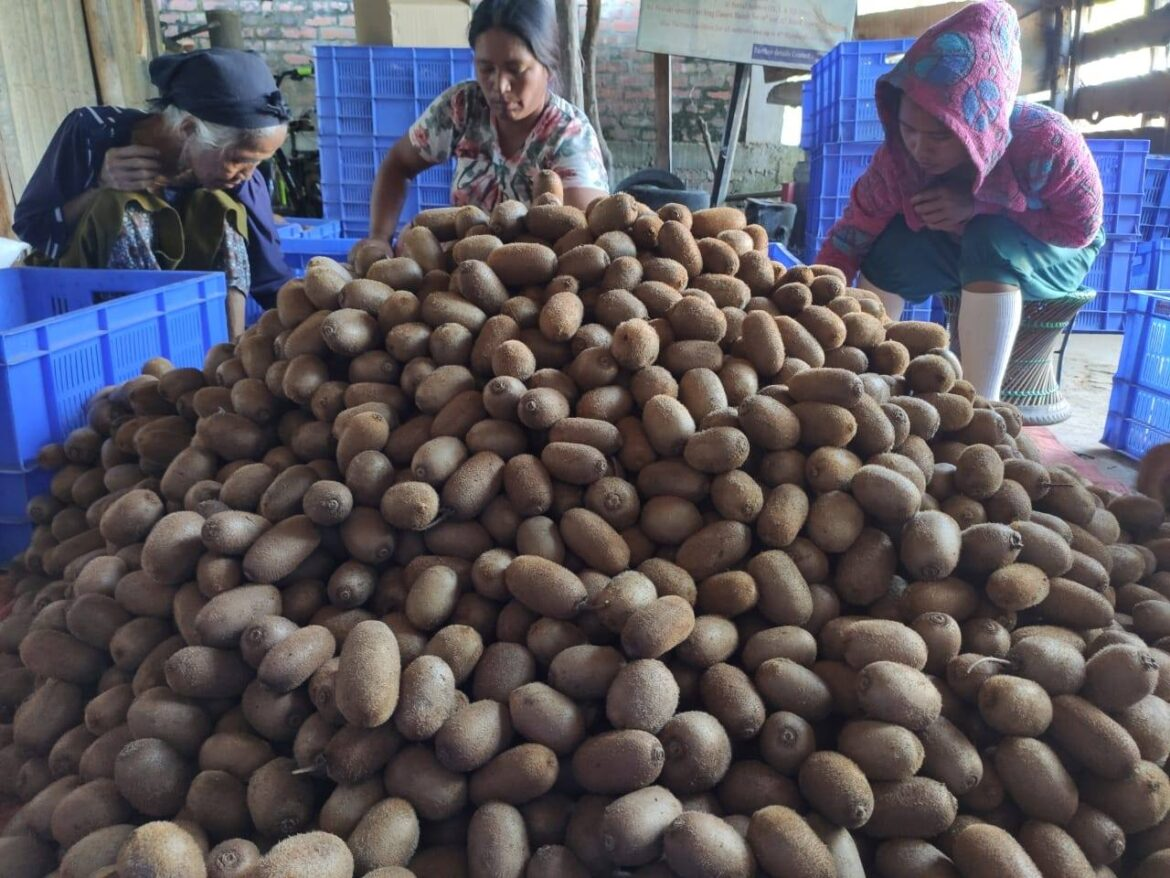 1 metric ton of organic Kiwi fruits from Manipur airlifted