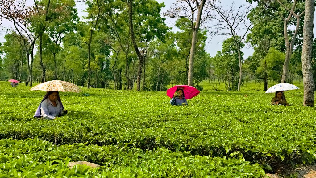Government to construct model high schools at tea gardens of Assam