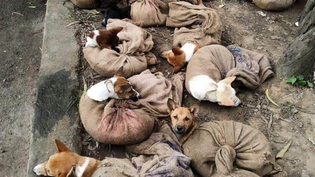 Nagaland Dog Meat Ban: Gauhati High Court issues stay order