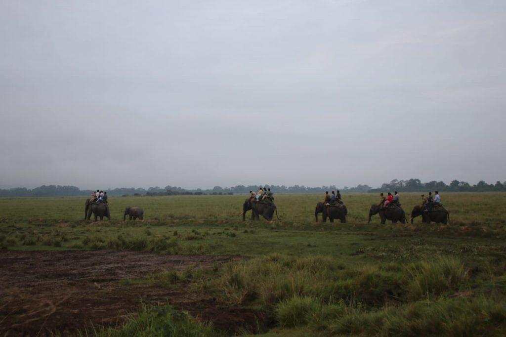 Kaziranga National Park resumes Elephant safari