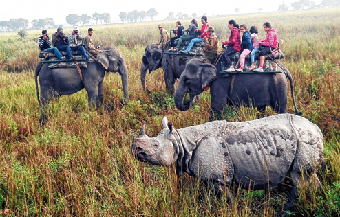 Kaziranga National Park records over 11k visitors in first month after reopening
