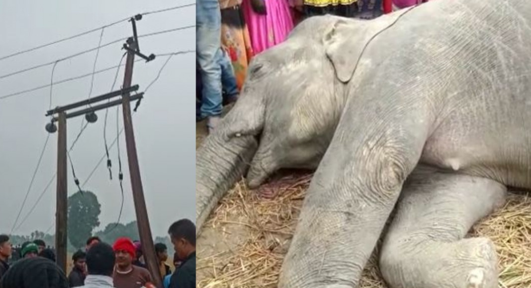 Six persons arrested for killing elephants in Assam due to electrocution