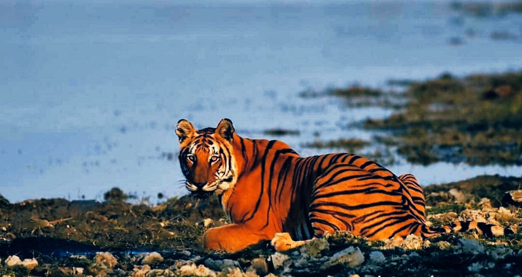 Phase IV of Tiger Monitoring in Kaziranga National Park begins