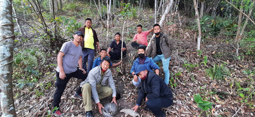 Endangered Pangolins released into wildlife reserved forest area in Phek district of Nagaland