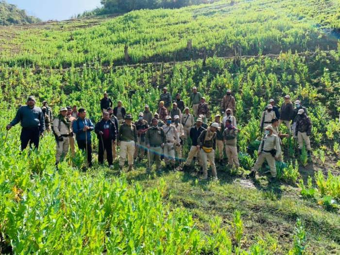 Is NSCN-IM supporting poppy plantation in Manipur?
